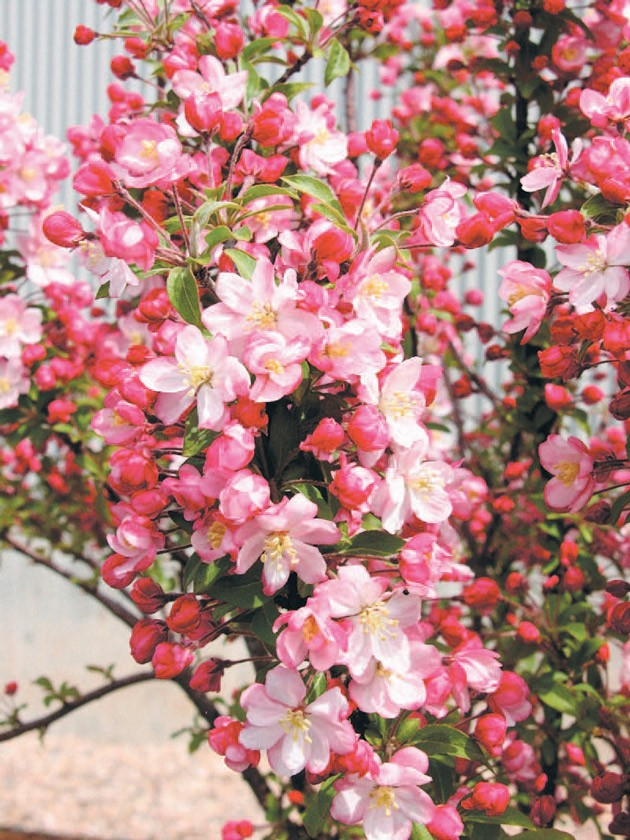 Completely new Utah's spring blossoms make four seasons supreme « Tooele  GB42