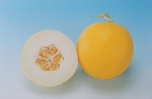Canary melon 'Amy,' an All American Selection winner, is one of many melons in the Curcumas genera. photo courtesty of the National Garden Bureau