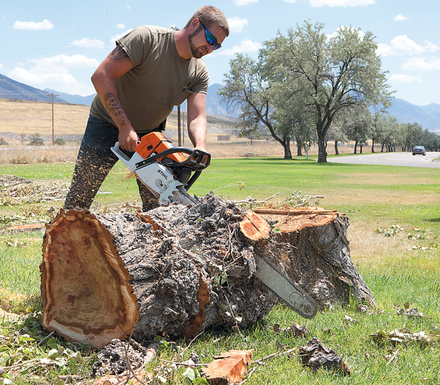 Stansbury's iconic poplars to be felled