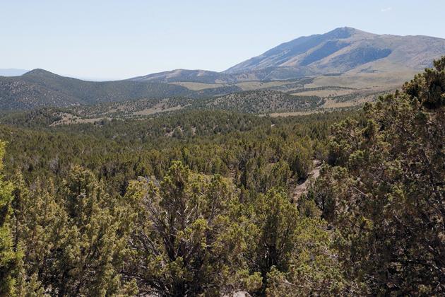 Goals set to restore habitat for area deer