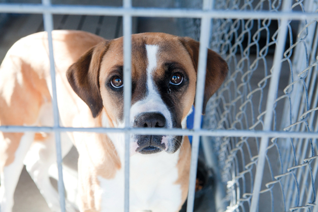 Area animal shelters not funded equally
