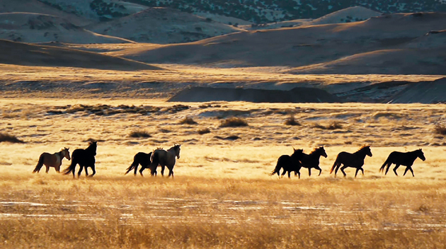 Documentary brings county's wild horse herd to the big screen