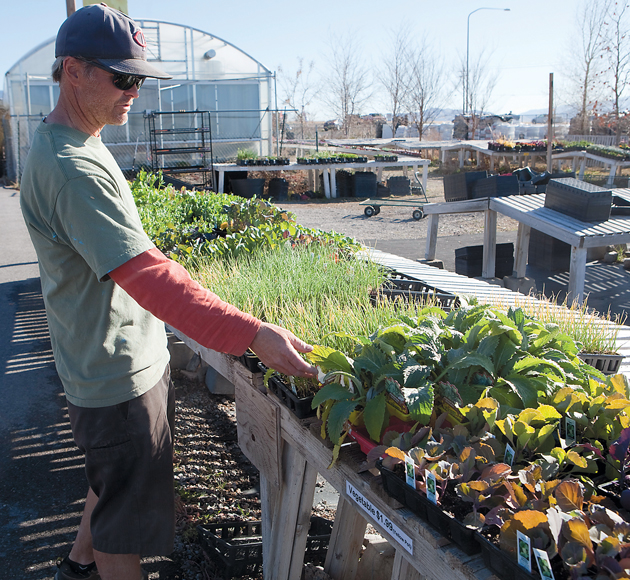 Experts offer tips to grow a healthy garden despite drought this year