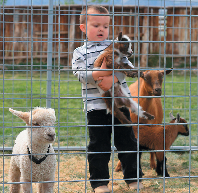 Clark Farm to host lots of baby animals and kids this Saturday