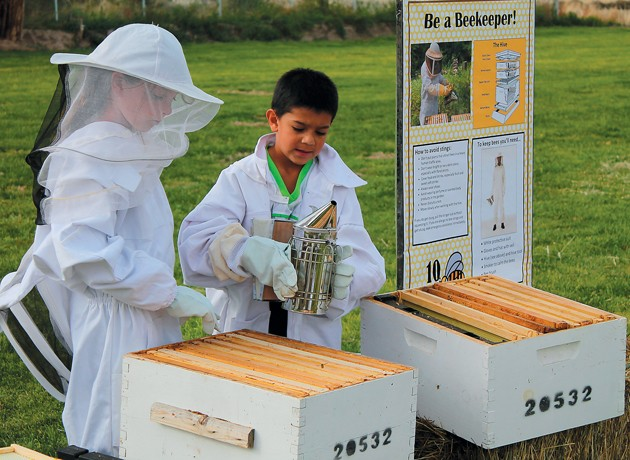 Clark Farm will be hive of activity with Honey Harvest Festival