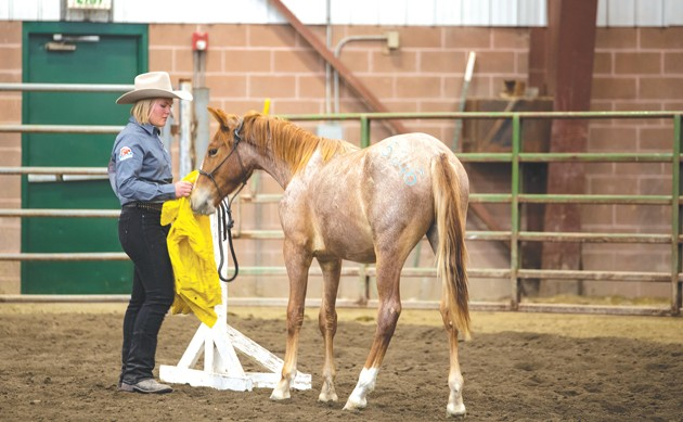 Wild horses adopted at festival